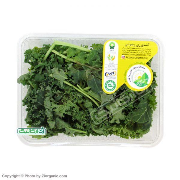 سبزی کیل ارگانیک